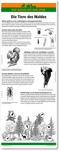C11 Die Tiere des Waldes