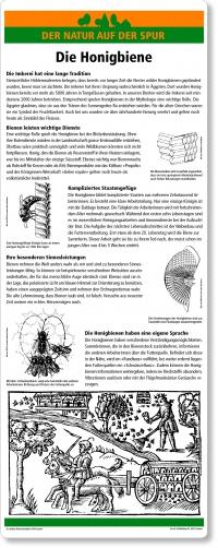C18 Die Honigbiene