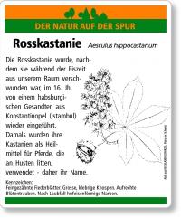 D29 Rosskastanie