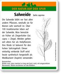 D33 Salweide