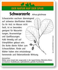 D35 Schwarzerle