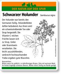 D05 Schwarzer Holunder