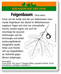 D72 Feigenbaum