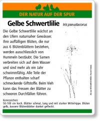 E17 Gelbe Schwertlilie