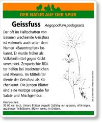E02 Geissfuss