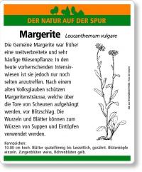 E39 Gemeine Margerite