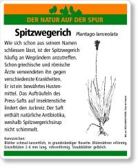 E04 Spitzwegerich
