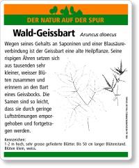 E46 Wald-Geissbart