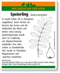 D58 Speierling