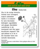 D10 Efeu