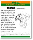 D11 Elsbeere