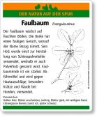 D13 Faulbaum