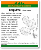 D50 Bergulme