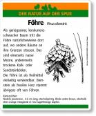 D54 Föhre
