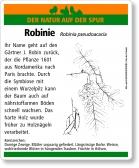 D57 Robinie