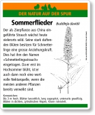 D67 Sommerflieder