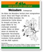 D07 Weissdorn