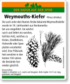 D71 Weymouth-Kiefer
