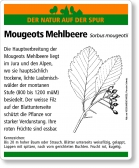 D87 Mougeots Mehlbeere