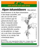 D88 Alpen-Johannisbeere
