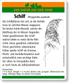 E27 Schilf