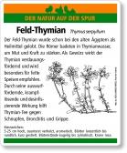 E34 Feld-Thymian