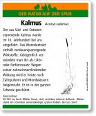 E44 Kalmus