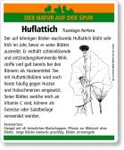 E54 Huflattich