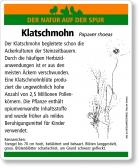 E56 Klatschmohn