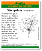 D59 Stechpalme