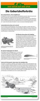 C31 Die Geburtshelferkröte