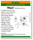 D56 Mispel