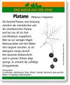 D64 Platane
