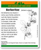 D69 Berberitze