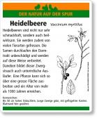D85 Heidelbeere