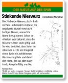 E11 Stinkende Nieswurz