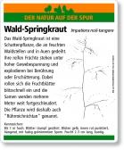 E15 Wald-Springkraut