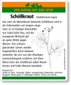 E16 Schöllkraut