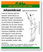 E21 Gemeines Johanniskraut