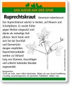 E30 Ruprechtskraut