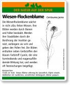 E36 Wiesen-Flockenblume