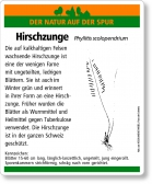 E45 Hirschzunge