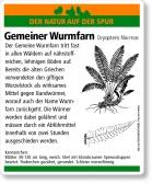 E58 Gemeiner Wurmfarn