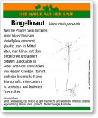 E72 Ausdauerndes Bingelkraut